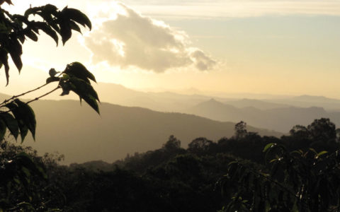 view+from+Keith+Pech+Darmeli+Estate+coffee+in+Boquete+district+of+Panama